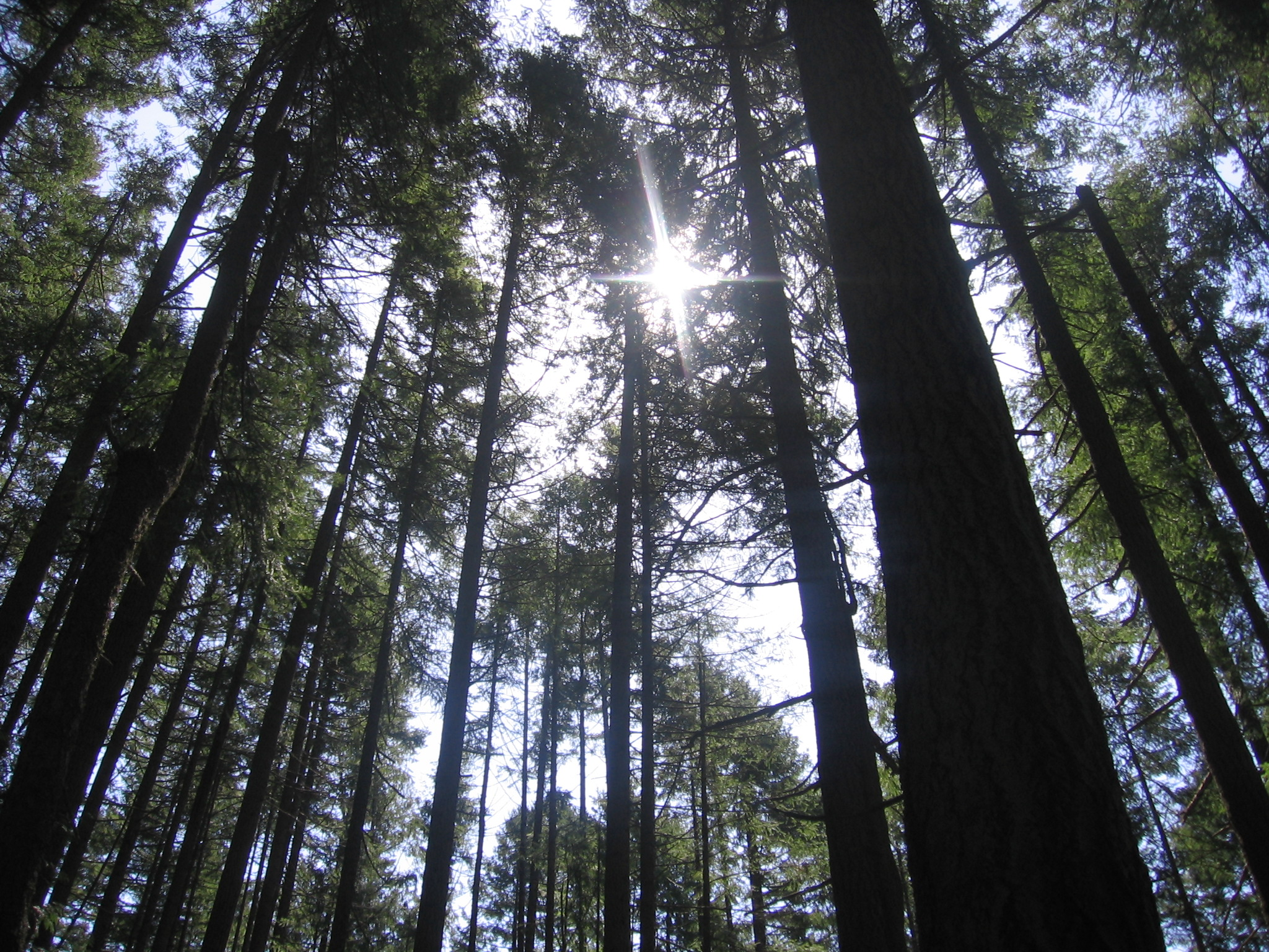 Forest White Light