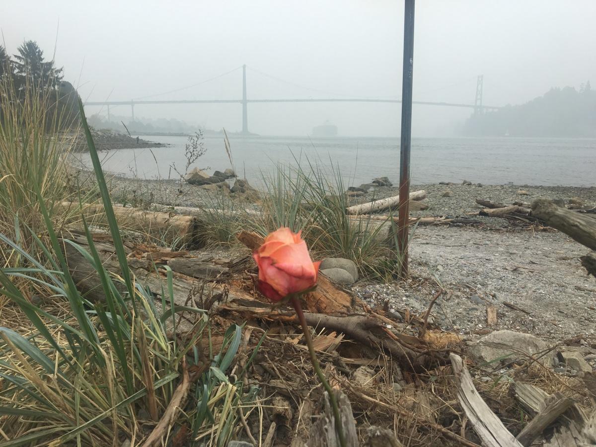 One Rose and a SmokyBridge